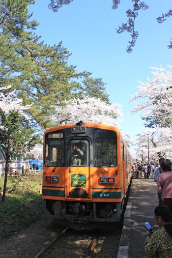芦野公園桜祭り2014-9