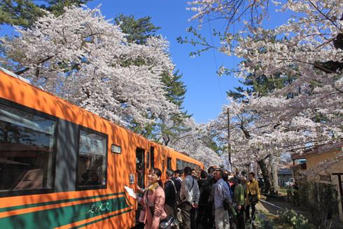 芦野公園桜祭り2014-10