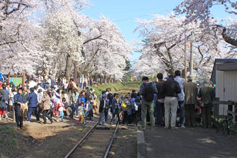 芦野公園桜祭り2014-11