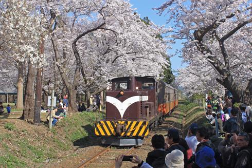 芦野公園桜祭り2014-12