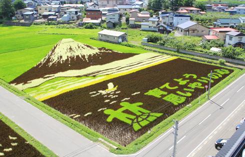 田舎館田んぼアート2014-7