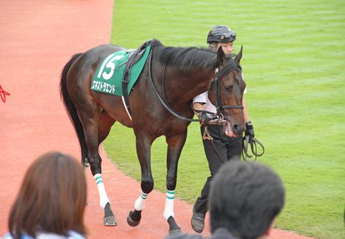 新潟競馬2014-12