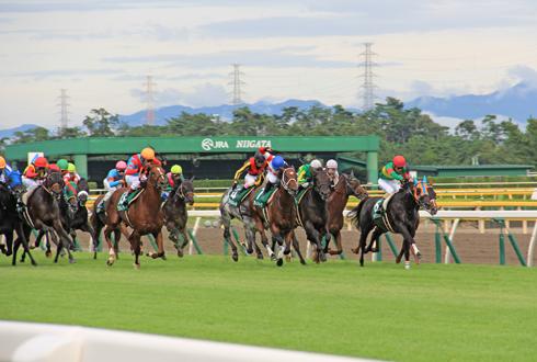 新潟競馬2014-15
