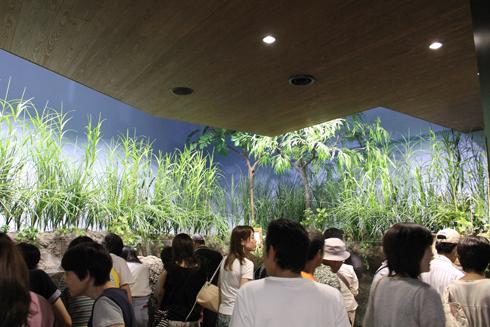 クラゲ水族館-3