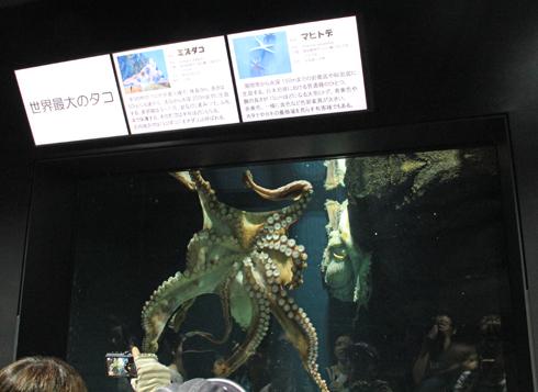 クラゲ水族館-5