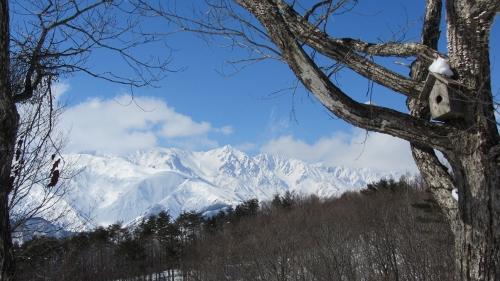 峰方樵の道から望む八方尾根白馬連峰 (500x281)
