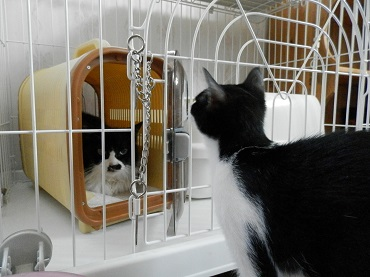 りかちゃんと子猫5