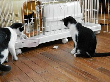 りかちゃんと子猫4