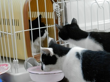 りかちゃんと子猫2