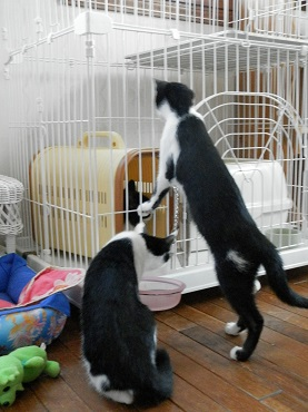 りかちゃんと子猫