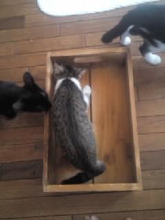 レーヴと箱4