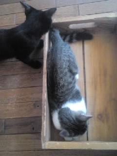レーヴと箱3