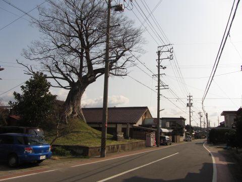 野村一里塚と旧東海道
