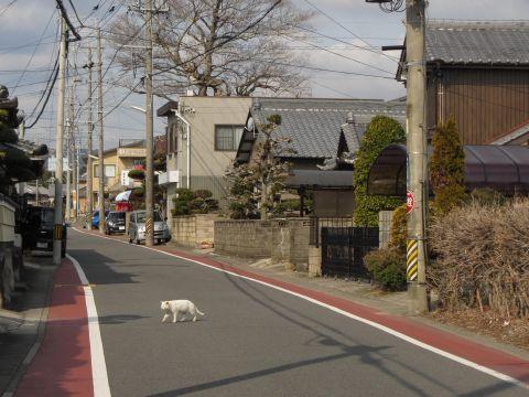 旧東海道 野村