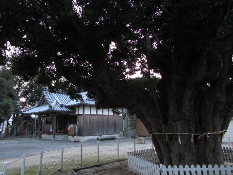 庄野川俣神社とスダジイ