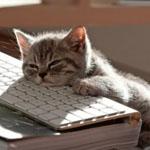 書き方に悩む猫