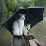 雨の対策をする猫