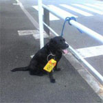 駐禁違反で捕まる犬