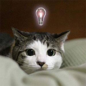 閃いたネコ