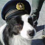 警察帽を被った犬