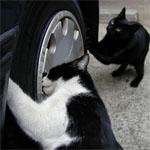 猫のタイヤチェック