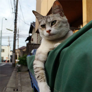 荷台に乗る猫