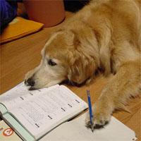 受験勉強する犬