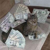 金持ちの猫