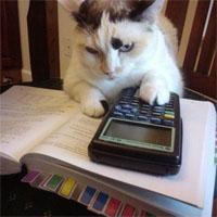 補助金の計算をする猫