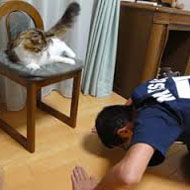猫にお願いする人