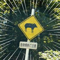 動物飛び出しの注意喚起