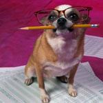 書類を書く犬