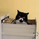 書類の保管