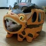本物の猫バス