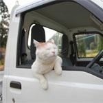 猫のトラックドライバー