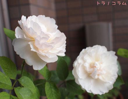キャシドラル5・6