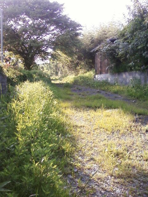 桜の木と道端の雑草