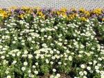 都庁の花壇①