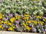 都庁の花壇②