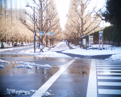雪の残る明治神宮絵画館前イチョウ並木:R2