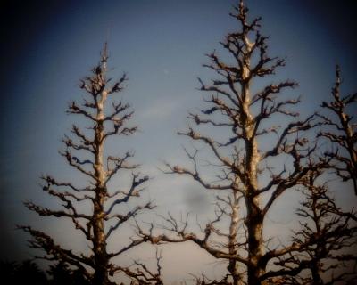 プラタナス並木と月:Entry