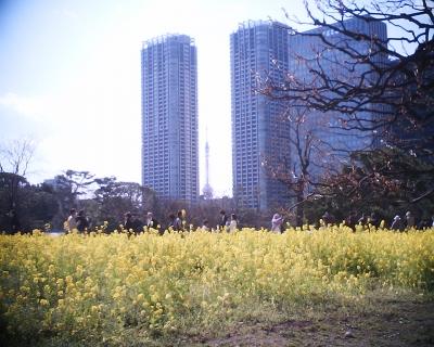 菜の花の向こうの東京タワー:R2