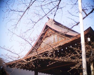 東京の桜の標本木:R2