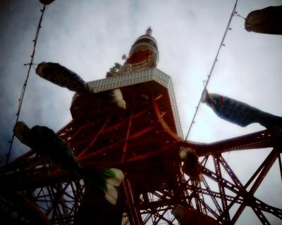 東京タワーと鯉のぼり:Entry