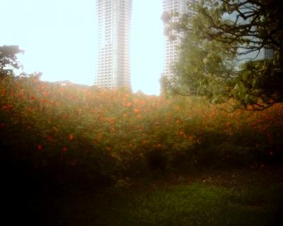 ビルの間に東京タワーが・・・Entry