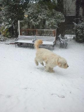 雪の中のロビー