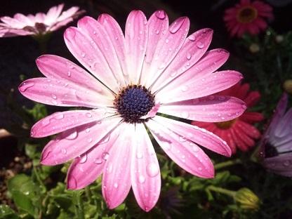 お花の水2