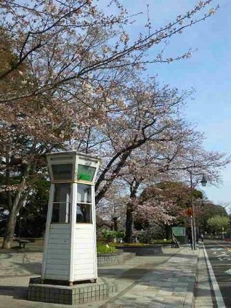 桜3292