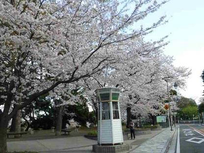 20140405桜