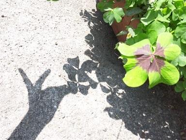 クローバーの影2